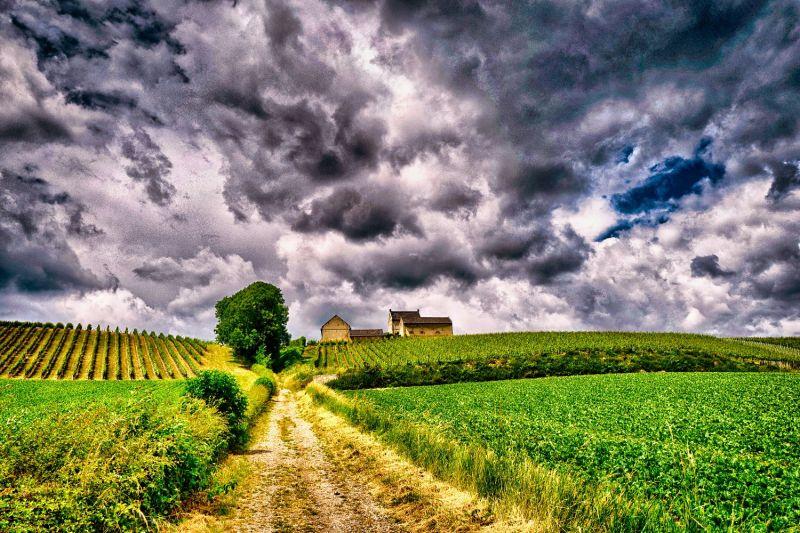 <strong>Nederland, Limburg,  Jekerdal,  wijnboerderij</strong>